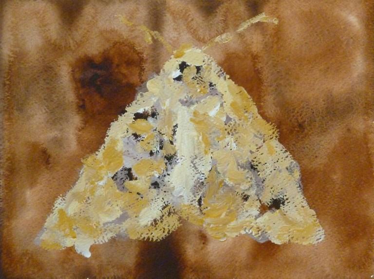 Moth 03 Dolz